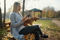 Mujer hermosa joven en el parque con su perro de pelo largo divertido de la chihuahua Fondo del otoño Imagen de archivo