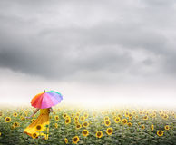Mujer hermosa que sostiene el paraguas multicolor en campo y raincloud del girasol Fotografía de archivo