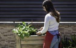 Mujer hermosa que toma cuidado del jard?n de verduras urbano fotos de archivo