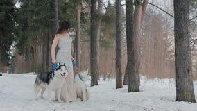 Mujer hermosa y husky siberiano de dos perros almacen de metraje de vídeo