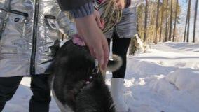 Mujer hermosa y pequeño niño que caminan en bosque del invierno con del perro fornido Madre joven feliz con la hija en metrajes