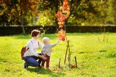 Mujer hermosa y su pequeño nieto que miran el árbol hermoso del otoño fotografía de archivo libre de regalías