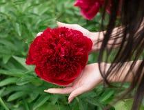 Mujer inclinada sobre una peonía de la flor Imagenes de archivo