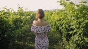 Mujer joven blanda en el vestido largo que camina a lo largo de las filas del viñedo almacen de metraje de vídeo