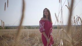 Mujer joven bonita que disfruta de la naturaleza y de la luz del sol en campo de trigo en los rayos coloridos increíbles del sol  metrajes