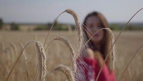 Mujer joven bonita que disfruta de la naturaleza y de la luz del sol en campo de trigo en los rayos coloridos increíbles del sol  almacen de video