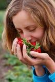 Mujer joven con las fresas frescas rojas en manos Foto de archivo libre de regalías