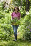 Mujer joven con las hierbas en a Fotografía de archivo libre de regalías