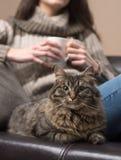 Mujer joven con su gato Imágenes de archivo libres de regalías