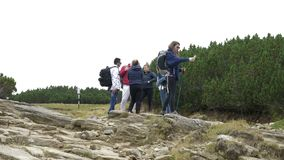 Mujer joven del estudiante en viaje de la montaña con sus amigos que usan smartphone en naturaleza que comprueba para saber si ha metrajes