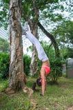 Mujer joven deportiva que hace el ejercicio de la yoga de la posición del pino que se inclina en árbol en parque en verano Situac Imagen de archivo