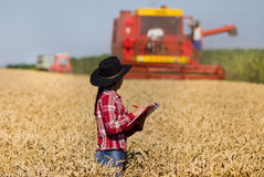 Mujer joven en campo de trigo durante cosecha Imágenes de archivo libres de regalías