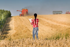 Mujer joven en campo de trigo durante cosecha Fotos de archivo