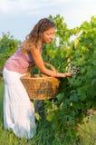 Mujer joven en cosecha de la uva fotografía de archivo libre de regalías