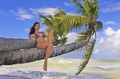 Mujer joven en el bikini que se sienta en las palmeras Fotos de archivo libres de regalías