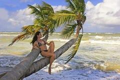 Mujer joven en el bikini que se sienta en las palmeras Imagen de archivo libre de regalías