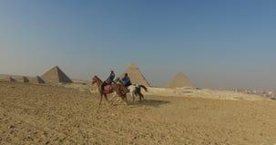 Mujer joven en el caballo que galopa rápidamente con el hombre local en las pirámides de Giza complejas metrajes