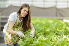 Mujer joven en jardín de flores Foto de archivo libre de regalías