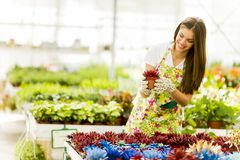 Mujer joven en jardín de flores Imagen de archivo libre de regalías