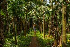 Mujer joven en la selva en la plantación tropical de la especia, Goa, Ind Fotos de archivo