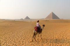 Mujer joven en un camello en las pirámides Imagen de archivo