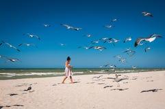 Mujer que alimenta una multitud de gaviotas en una playa Fotos de archivo