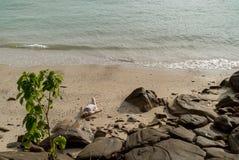 Mujer joven en una playa en vestido de la playa Imágenes de archivo libres de regalías