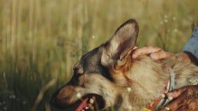 Mujer joven feliz hermosa que frota ligeramente su perro cariñoso en el tiempo de verano del campo Paseo femenino con su perro mi almacen de video