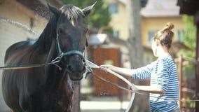Mujer joven feliz que salpica el agua en caballo negro al aire libre almacen de video