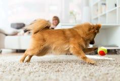 Mujer joven hermosa con su perro que juega con la bola en casa Foto de archivo libre de regalías