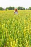 Mujer joven hermosa que recorre en el campo de trigo Imagen de archivo