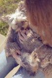 Mujer joven que abraza y que abraza su perro de perrito del terrier de Yorkshire en su revestimiento Fotos de archivo