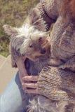 Mujer joven que abraza y que abraza su perro de perrito del terrier de Yorkshire en su revestimiento Fotografía de archivo
