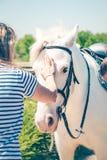 Mujer joven que acaricia el caballo blanco hermoso Amistad, sociedad y concepto de la confianza fotos de archivo