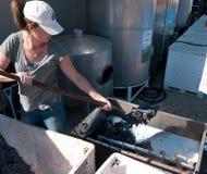 Mujer joven que alimenta la trituradora de la uva Imágenes de archivo libres de regalías
