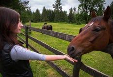 Mujer joven que alimenta un caballo en un pasto fotografía de archivo libre de regalías