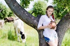 Mujer joven que bebe la leche fresca cerca de vacas en campo Fotos de archivo