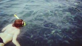 Mujer joven que bucea en la máscara que alimenta muchos pescados en el mar Top de la visión Cámara lenta 1920x1080 almacen de video
