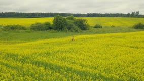 Mujer joven que camina en campo floreciente en un día de verano almacen de video