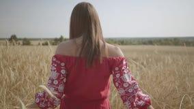Mujer joven que camina feliz en la cámara lenta a través de un campo que toca con los oídos del trigo de la mano Muchacha despreo almacen de video