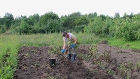 Mujer joven que cosecha la patata metrajes