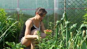 Mujer joven que escoge las fresas en día soleado almacen de video