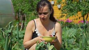 Mujer joven que escoge las fresas en el jardín almacen de metraje de vídeo