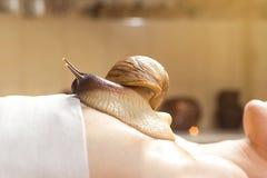 Mujer joven que experimenta el tratamiento con los caracoles de Achatina del gigante en b Imágenes de archivo libres de regalías