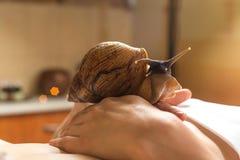 Mujer joven que experimenta el tratamiento con los caracoles de Achatina del gigante en b Foto de archivo libre de regalías