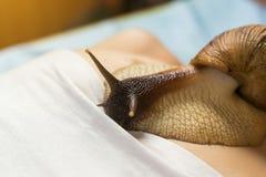 Mujer joven que experimenta el tratamiento con los caracoles de Achatina del gigante en b Imagenes de archivo