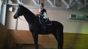 Mujer joven que frota ligeramente un cuello del ` s del caballo dentro Un caballo negro pedigrí para el deporte ecuestre almacen de video