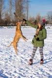 Mujer joven que juega con el americano Pit Bull Terrier en invierno imágenes de archivo libres de regalías