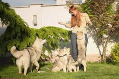 Mujer joven que juega con los perros Foto de archivo
