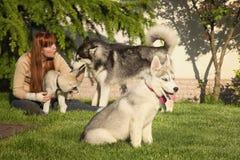 Mujer joven que juega con los perros Fotos de archivo